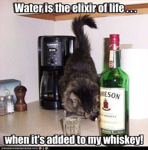 added caption captioned cat condition conditional elixir is life water when whiskey