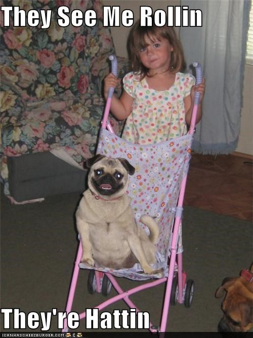 awesome,happy,pug,puggin,smile,smiles,smiling,stroller