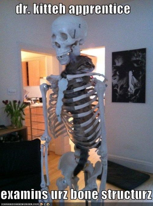 bone structure cat climbing doctor examination I Can Has Cheezburger looks good skeleton