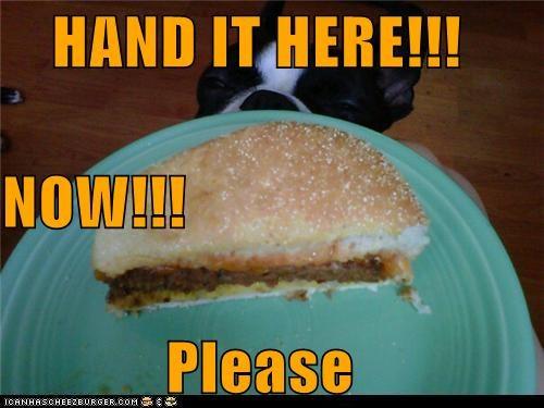 Cheezburger Image 5276808192