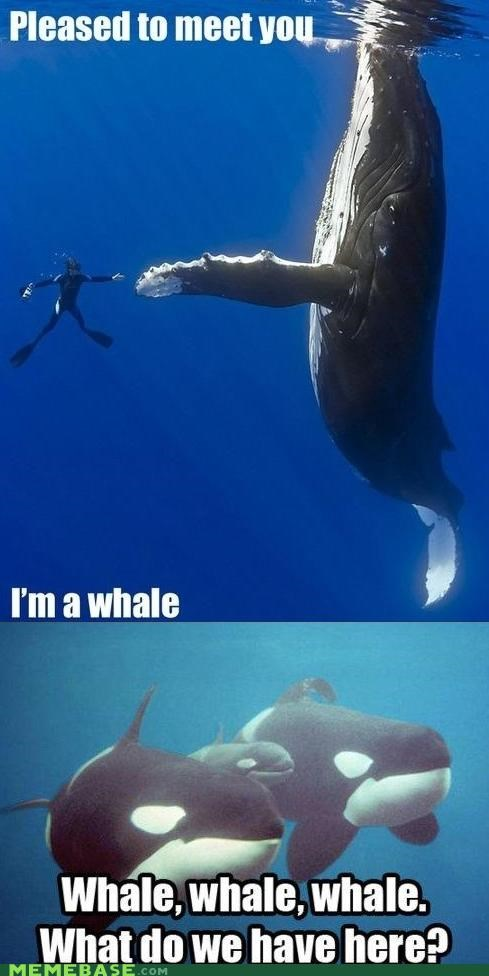 Memes,nice to meet you,Reframe,well,whale