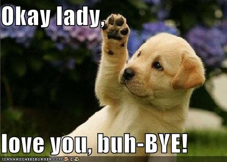 bye bye bye golden retriever puppy waving - 5276987648
