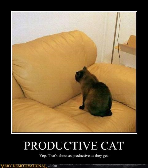 cat chair hilarious productive Staring
