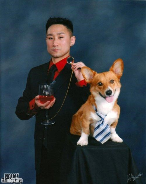 corgi dogs Photo portrait school picture too cool for school wait what