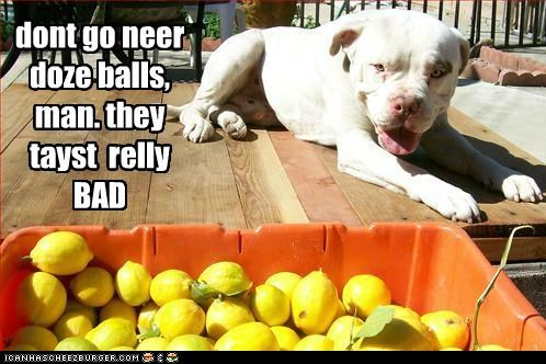 ball blah do not want gross lemons no no thanks pit bull pitbill yuck yucky