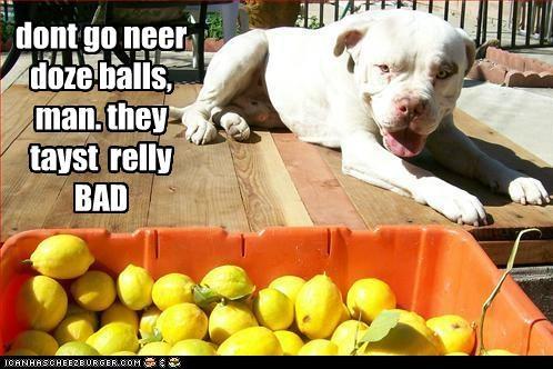 ball blah do not want gross lemons no no thanks pit bull pitbill yuck yucky - 5277451008