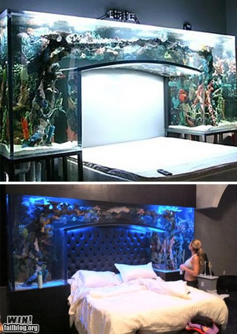 bed,design,fish,fish bowl,fish tank,pets,Tropical