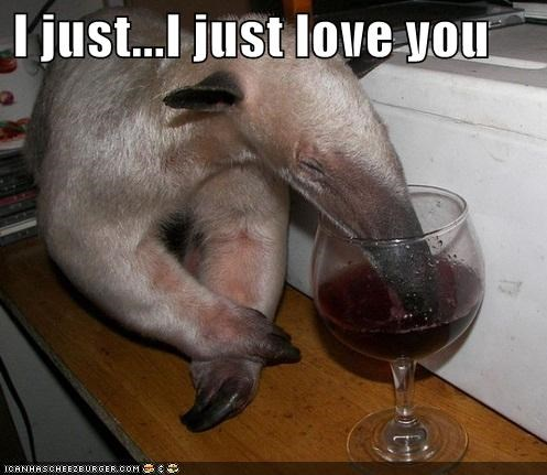 alcohol anteater delicious drinking drunk i love you i love you man me love you long time red red wine red wine wine - 5277980416