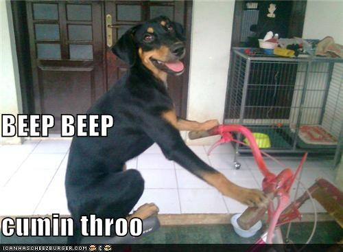 beep beep,bicycle,bike,happy dog,riding a bike,Rotweiler,silly dog,smile,smiling