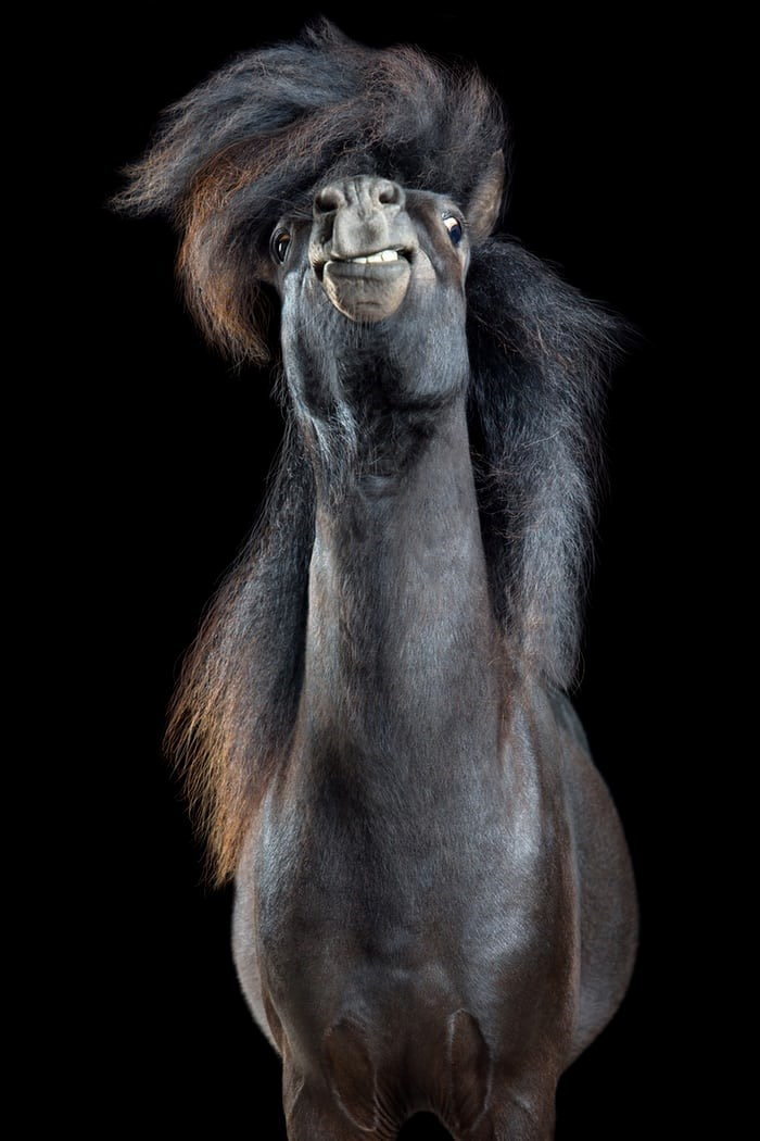 amazing photographs of horses flipping their hair and looking pretty via the guardian