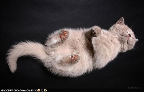 belly up,cyoot kitteh of teh day,do not disturb,feets,sleeping,tummy