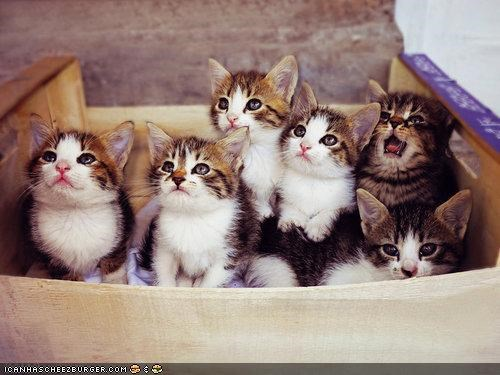 boxes cardboard box cyoot kitteh of teh day kitten lots of cats theres-always-one