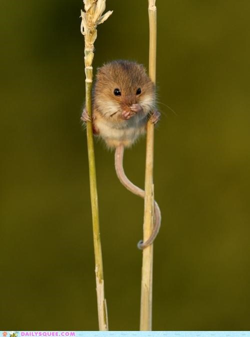 acting like animals climbing competition concern grass gymnast gymnastics Hall of Fame hanging on parallel bars rodent suggestion uneasy vertical - 5278665984