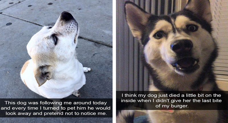 funny dogs on snapchat being fun