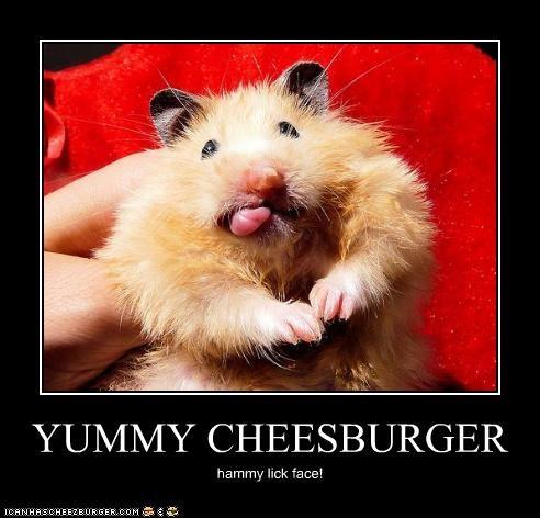 Cheezburger Image 5278798336