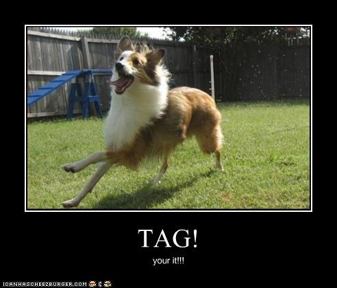 TAG! your it!!!