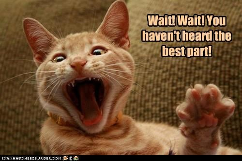 best caption captioned cat havent heard part story storytelling wait - 5279115008