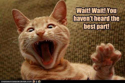 best caption captioned cat havent heard part story storytelling wait - 5279115008