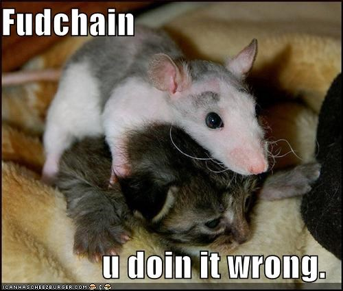 food chain kitten lolcats lolkittehs rats - 527915264