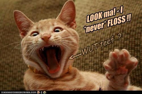 LOOK ma! - I *never* FLOSS !! <---- WUT teef ?
