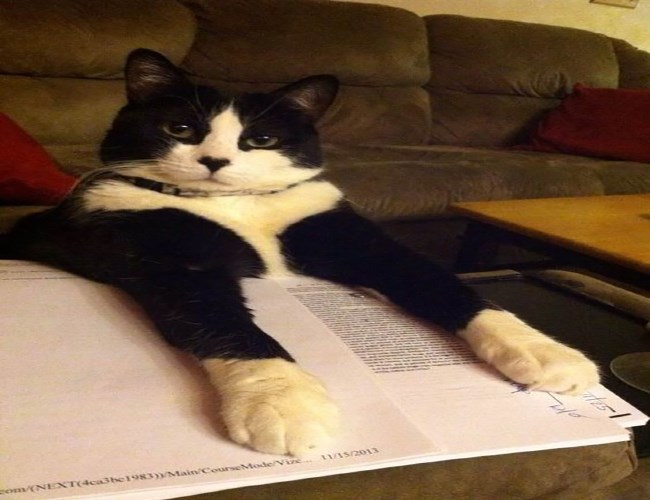 a funny list of cats as bookmarks to make everyone smile and they are very cute