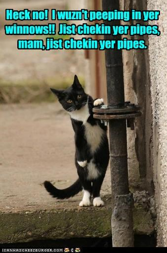 caption captioned cat checking creeper creepy excuse inspecting just no peeping pipes window - 5280158464