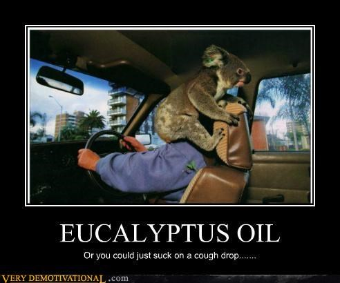 cough drop,eucalyptus,hilarious,koala
