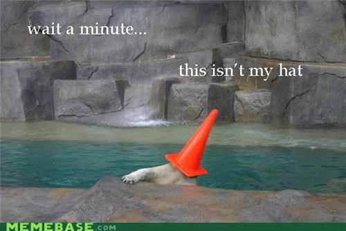 bear cone isnt-my-hat Memes things zoo - 5280450304