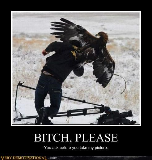 bird dangerous eagle hawk hilarious picture wtf - 5280751616