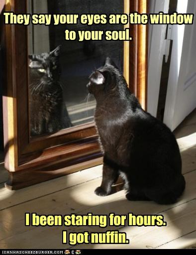 caption,captioned,cat,eyes,hours,idgi,mirror,nothing,saying,soul,Staring,window