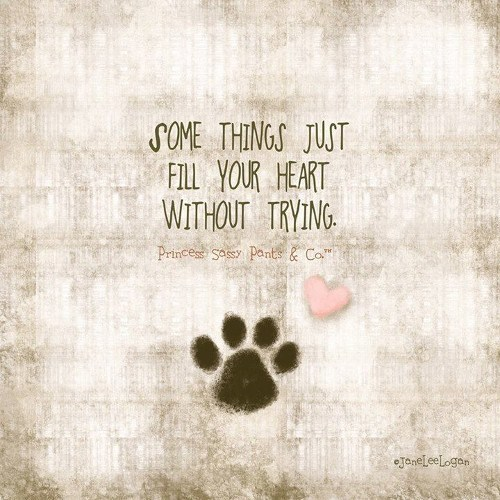 quotes pets love animals - 5281029