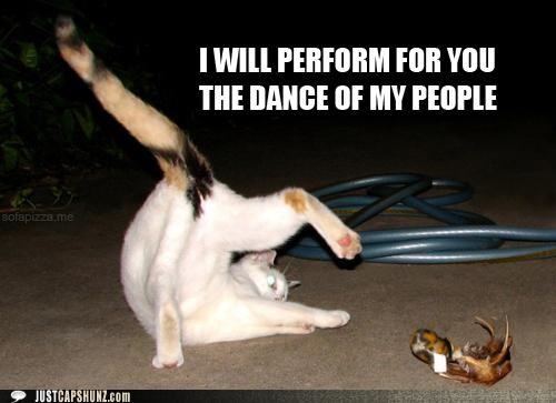 animals,Cats,crazy,dance,dancing,I Can Has Cheezburger,my people,traditional