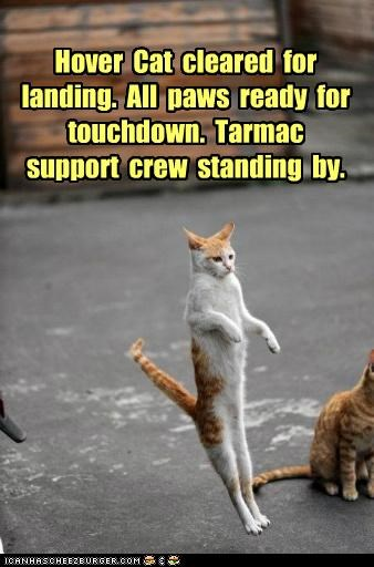 by caption captioned cat cleared crew HoverCat landing paws ready standing support tarmac touchdown waiting - 5281266432