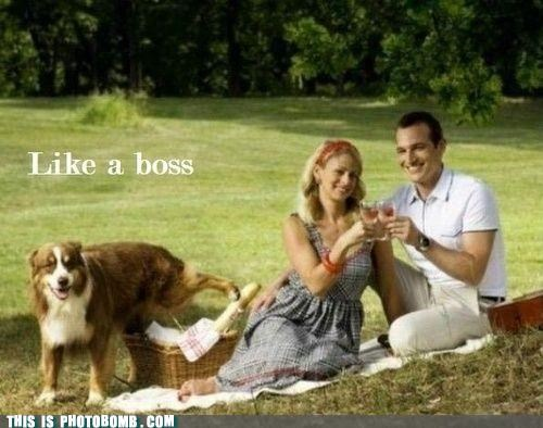 animal,Animal Bomb,best of week,dogs,Like a Boss,picnic