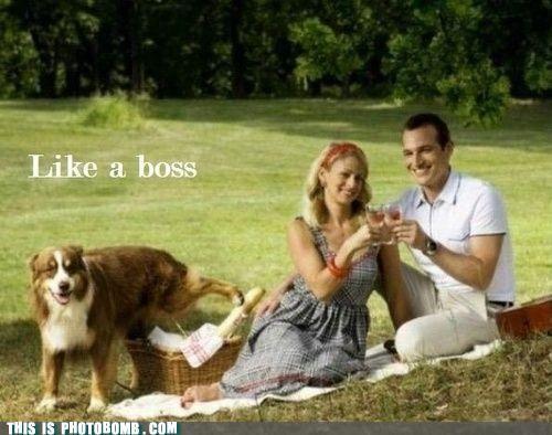 animal Animal Bomb best of week dogs Like a Boss picnic - 5281564928