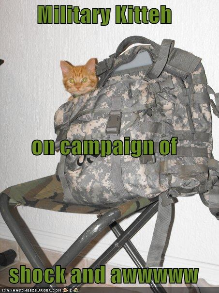 Military Kitteh on campaign of shock and awwwww