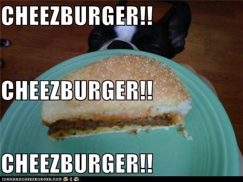 Cheezburger Image 5282318592