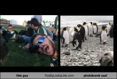 animals guy photobomb random guy seal - 5282635776