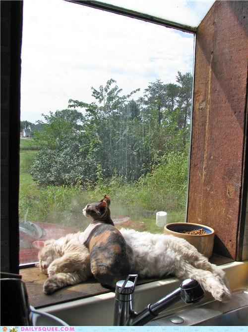 cat Cats cuddling explanation furniture posing reader squees reason sphynx truth warmth - 5282875904