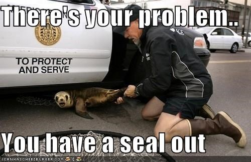 animals mechanic oops seal seal out theres-your-problem - 5283291392