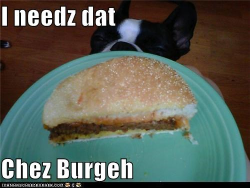 Cheezburger Image 5283393792