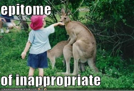 inappropriate meme of a kid seeing two kangaroos engaged in sex