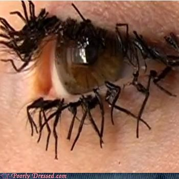 eye,eyelash,false eyelashes,flies,fly legs