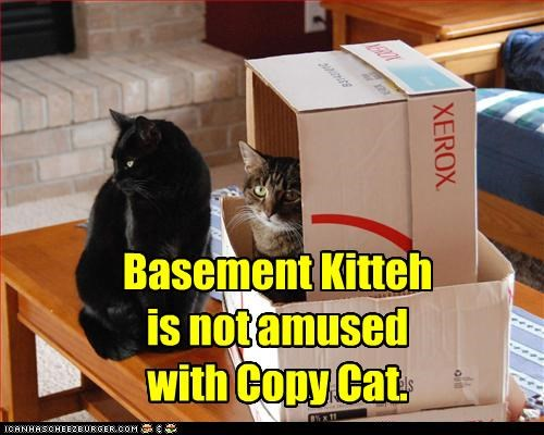 Basement Kitteh is not amused with Copy Cat.