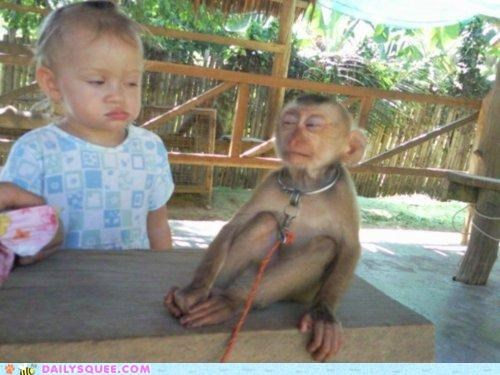 acting like animals disdain expression Hall of Fame lolwut monkey plotting scowling Staring suspicious toddler unease