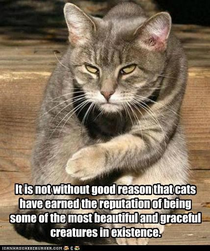 It is not without good reason that cats have earned the reputation of being some of the most beautiful and graceful creatures in existence.