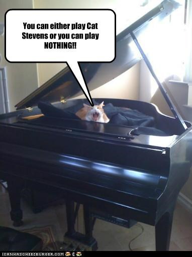 caption captioned cat cat stevens choice either Music nothing or piano play ultimatum
