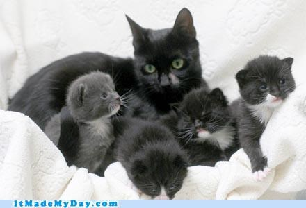 amazing animal cat good news Hall of Fame happy hero It Made My Day kitten mother news story win - 5285011456