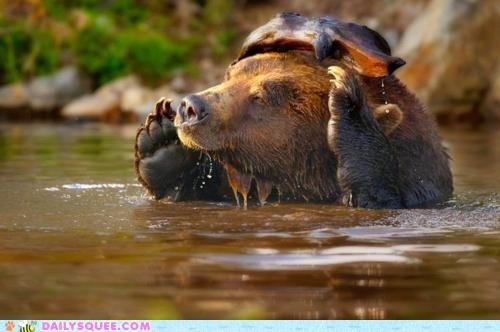 acting like animals bear confused fish food grizzly bear location lost noms question - 5285194752