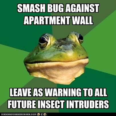 animemes apartment foul foul bachelor frog frog insect intruders wall warned - 5285318400